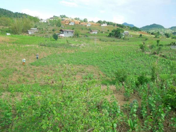リンレイ村の畑。ここでオーガニックハーブ栽培を始める