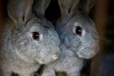 化粧品に動物たちの犠牲が必要か、一度問い直してみる機会かもしれない