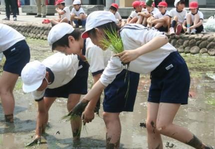 田植え作業をする子どもたち