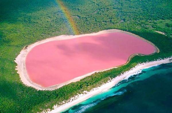 ピンク色に浮く「ラック・ローズ」spisanievip.com http://goo.gl/dlMdxE