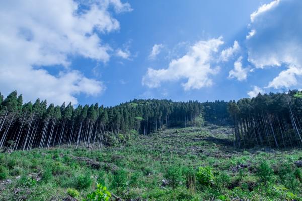 森の中は区画ごとに整理されている。苗木を植えたばかりのエリアの下刈りには、10人がかりで作業しても、丸一日かかるという