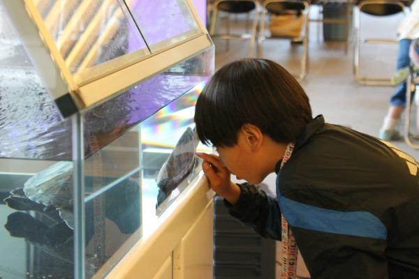 「本当かな?」亀の甲羅の四角模様は13個あると聞き、数を数える子ども
